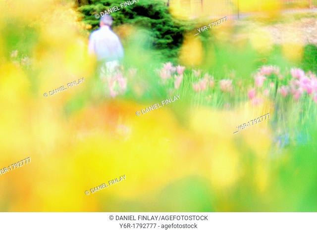 Spring flower blur in Golder's Hill Park, Hampstead, London, England