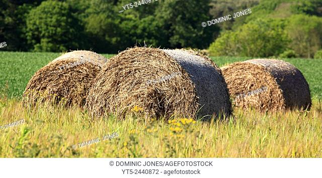 Haybails in a field, Worcestershire, England, Europe