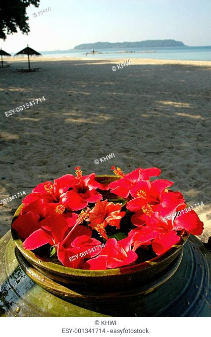 Malvaceae Hibiscus Flowers On A Beach