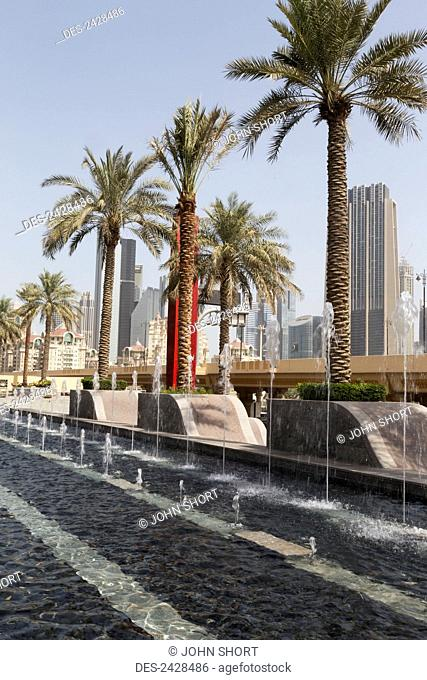 Palm trees by a water fountain with skyscrapers and blue sky in the background; Dubai, United Arab Emirates