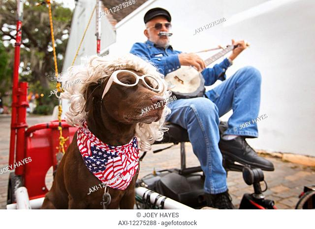 Senior street performer playing a banjo and harmonica with his dog in the foreground wearing glasses, a wig and and American flag bandana; St