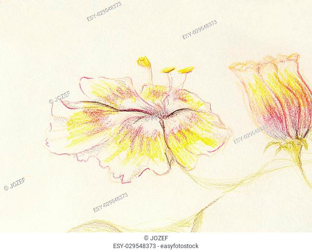 Color drawing flower. Original hand draw on paper