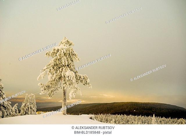 Tree on snowy remote mountain