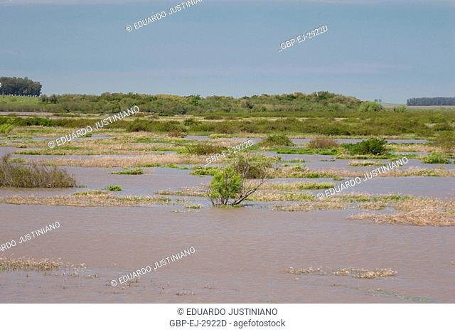 Flooded sandbank, Flood, Pântano Grande, Rio Grande do Sul, Brazil