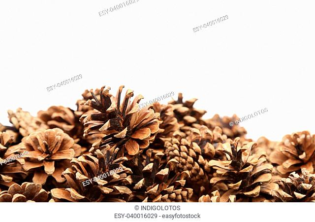 The Pine cones are located down white background