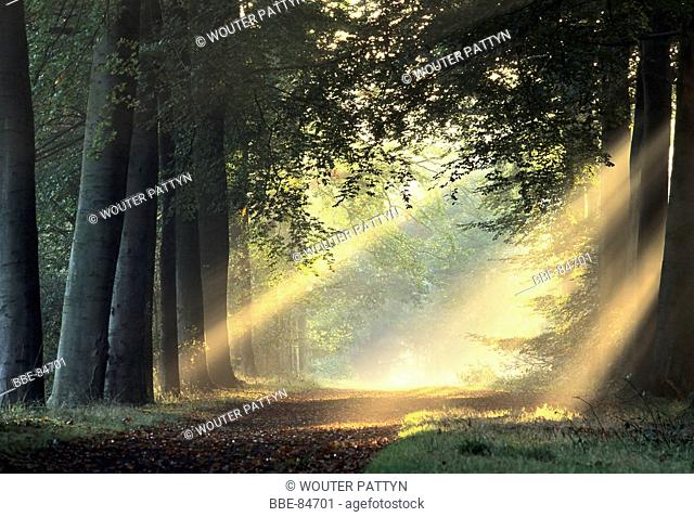 sun beams in the morning in the forest