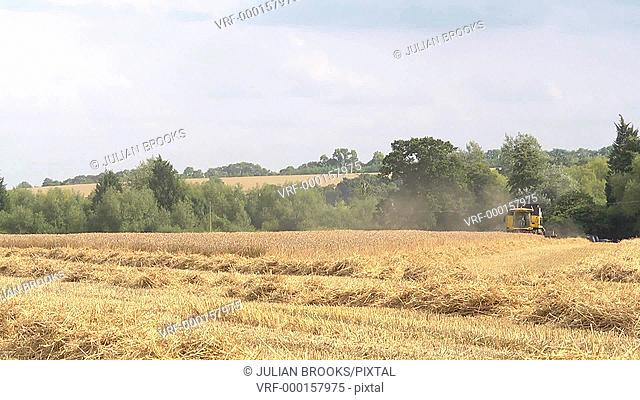Time Lapse wheat Harvest - Yellow Combine Harvester - two rows
