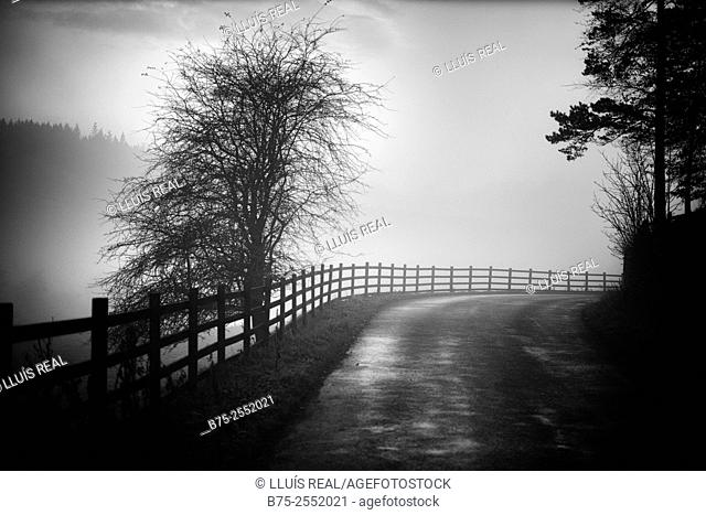 Rural road with wooden fence and trees in a misty day. Yorkshire Dales, North Yorkshire, Grassington, Skipton, England, UK, Europe