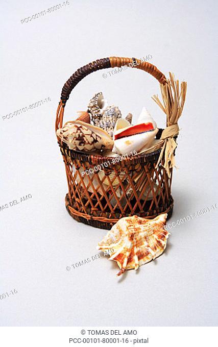 Studio shot of a basket of shells