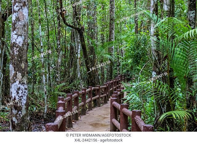 Warm water streams Sa Morakot, Wildlive Sanctuary, Dong Fern, Fern Grove, Khao Pra, Bangkram Krabi, Thailand. Southeast Asia