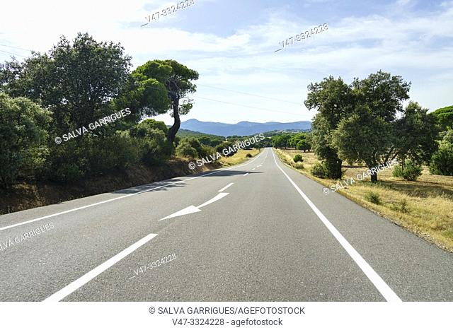 Straight rural road between fields and trees, Ávila, Castilla y León, Spain