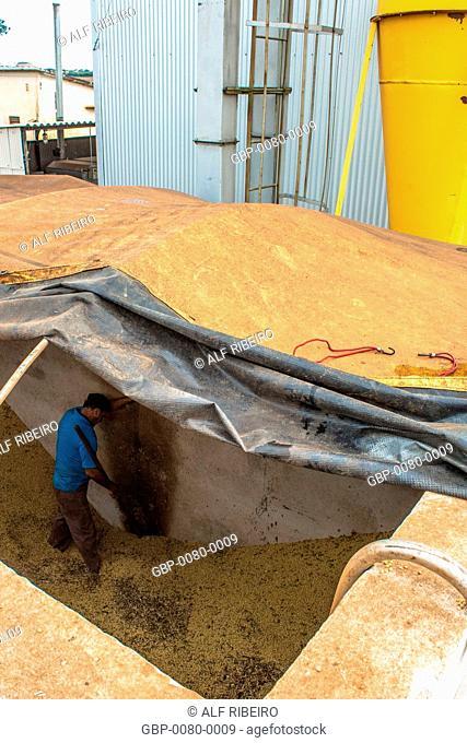 Worker prepares, harvested soybeans, separated, silo, Bela Vista do Paraíso, Londrina, Paraná, Brazil