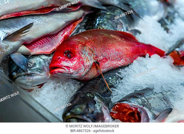 Public Market, fish market, display of edible fish, Red Snapper, at a stand, Pike Place Market, Seattle, Washington, USA