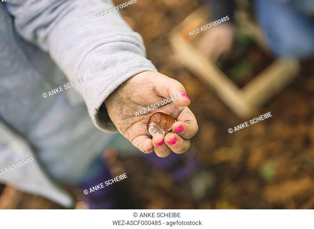 Girl holding chestnut in hand, close up
