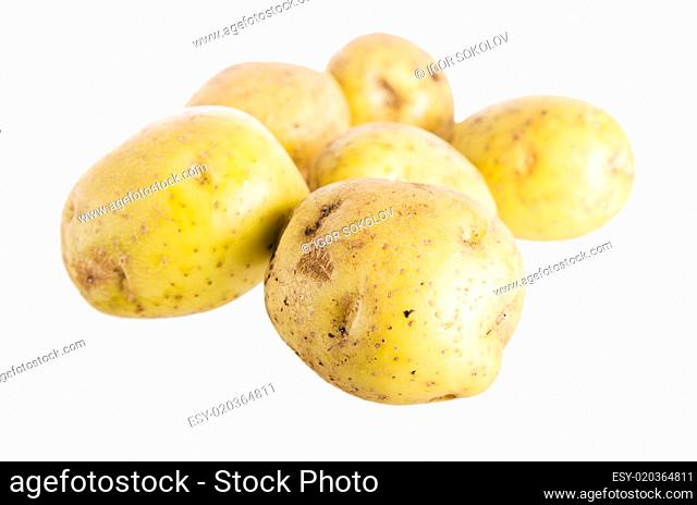 Tubers of a potato, it is isolated on white