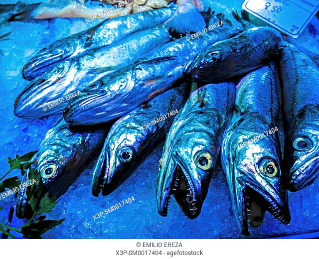 Hake for sale