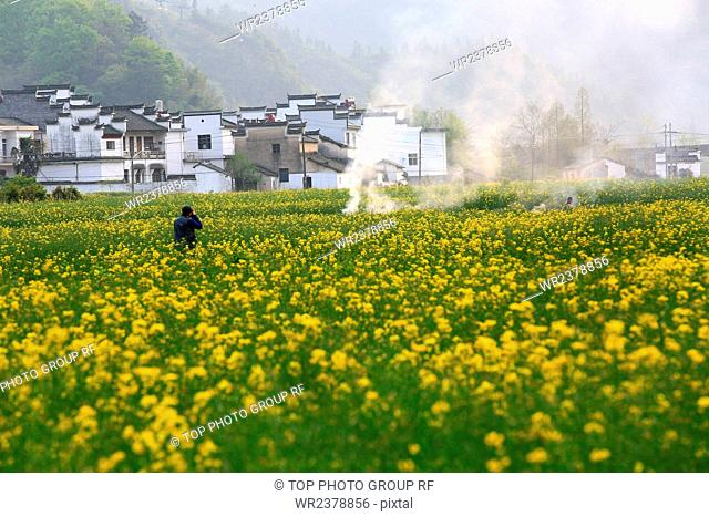 Rape flower Hui style housing Xiuning village Yixian County Anhui Province China