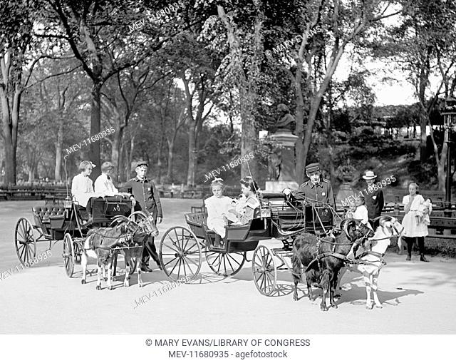Children riding in Goat carriages in Central Park, New York City, USA