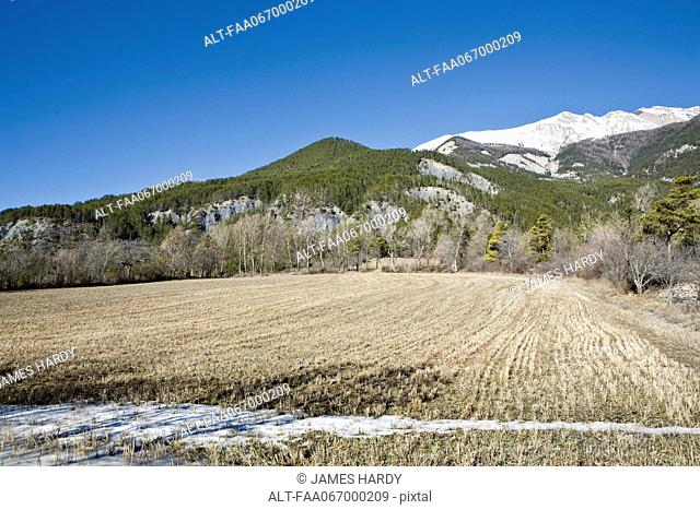 Field with snow-capped mountain in background