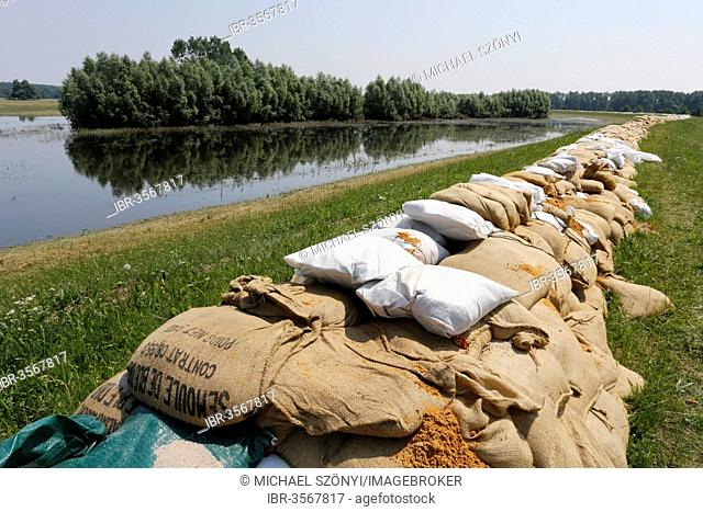Sandbags protecting a dike along the Elbe against floods, Lutherstadt Wittenberg, Saxony-Anhalt, Germany