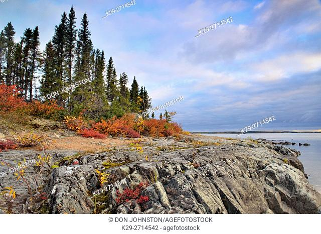 Ennadai Lake shoreline granite outcrops and autumn blueberry, Arctic Haven Lodge, Ennadai Lake, Nunavut, Canada