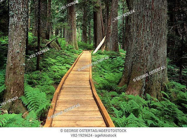 Lost Lake Trail boardwalk, Mount Hood National Forest, Oregon