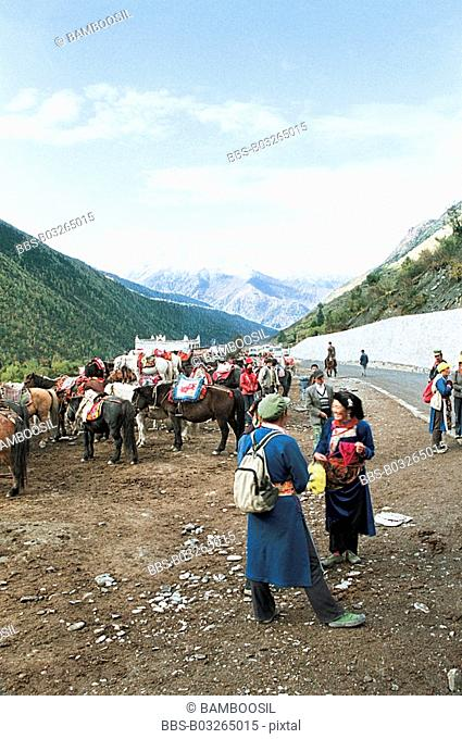 View of tourists with horses standing by road, Siguniang Mountain, Xiaojin County, Aba State, Sichuan Province of People's Republic of China