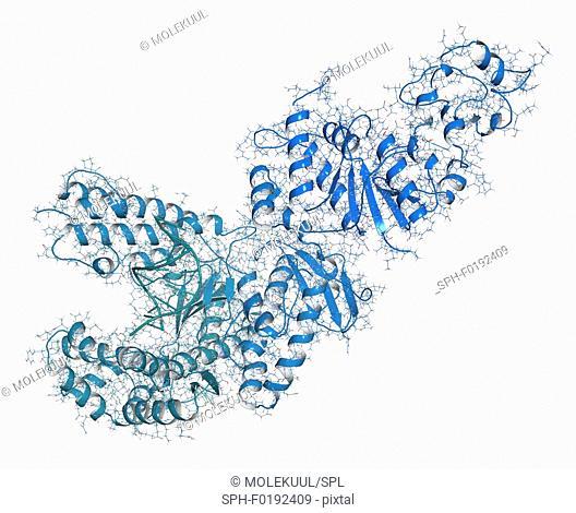 Taq polymerase PCR enzyme molecule, illustration