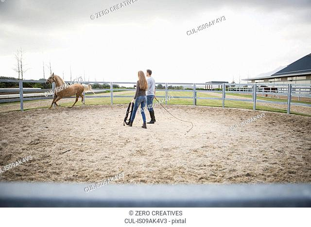 Two stablehands training palomino horse in paddock ring
