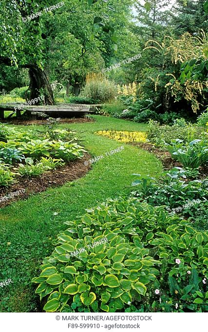 Hostas in perennial shade border under Betula pendula w/ grass path  (Hosta cv.; Betula pendula). Sunshine Farm, Renick, WV