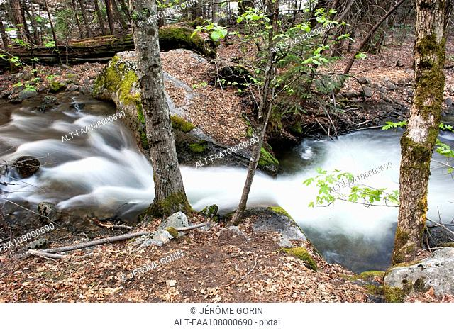 Tranquil stream in Yosemite National Park, California, USA
