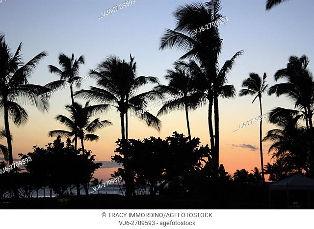 Silhouette of palm trees and bushes against the Pacific Ocean and a sunset, in Waikoloa Village, Hawaii, USA