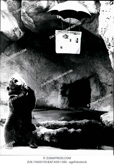 1968 - Rain Again: He has enough of it, this bear at the zoo of Budapest (Hungary). According to his mimics the weather report in the paper