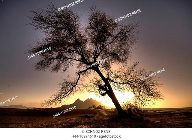 Desert, tree, oasis, Libya, Sahara, Africa, sundown, mountains, Romantical, mood, sand, crooked, leaning, tree, no leaves