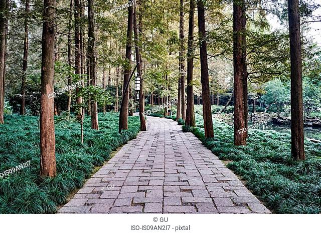 Trees and park path, Westlake, Hangzhou, China