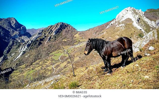 Horse in Saliencia valley, Somiedo Nature Park and Biosphere Reserve, Asturias, Spain