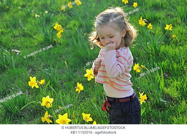 small child in a meadow with Daffodils