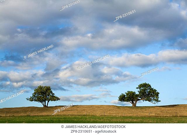 Two trees and cumulus clouds in Durham Region, Ontario, Canada