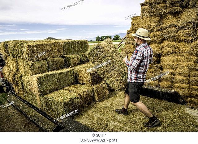 Mature man loading hay onto trailer