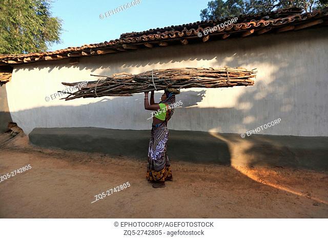 Woman carrying bundle of firewood, BHUMIA TRIBE, Karma village, Bagicha tahsil,Chattisgarh, India