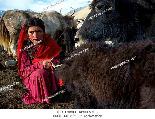 Afghanistan, Big Pamir, Wakhan, wakhi nomad woman milking a yak