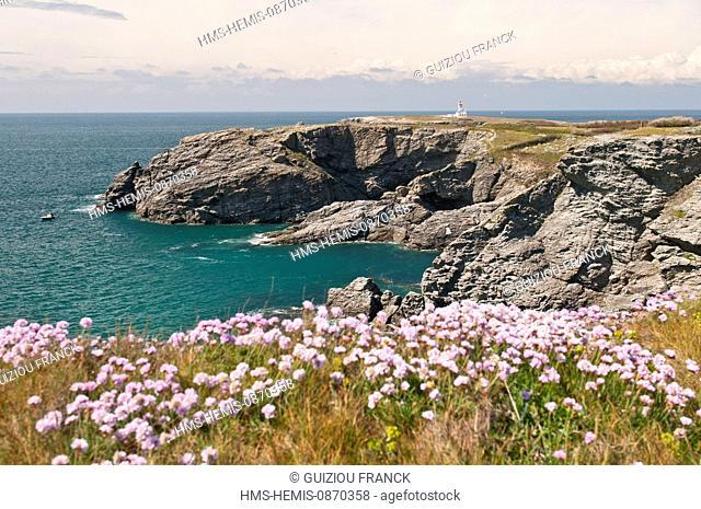France, Morbihan, Belle Ile en Mer, the wild coast, along the GR340 between the Pointe des Poulains and Herlin beach (Bangor village), the Pointe des Poulains