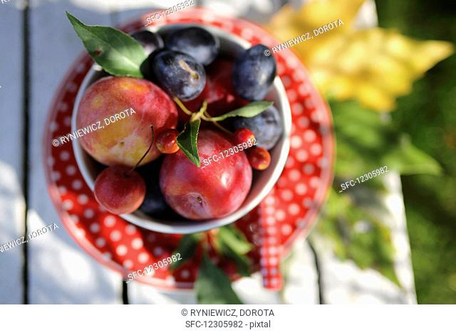 Fresh plums in a bowl on a garden table