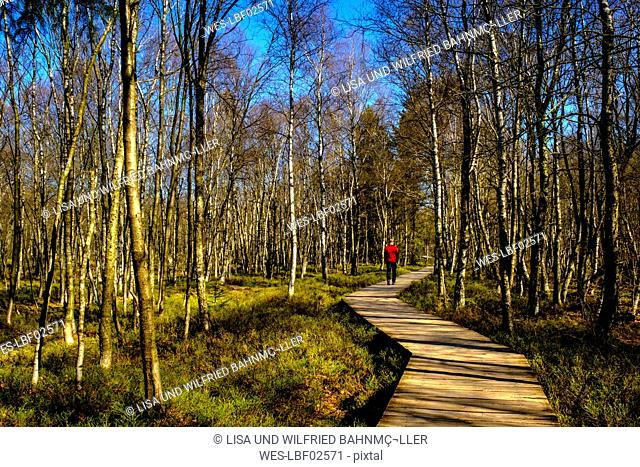 Hiker walking on a boardwalk, nature reserve, Red Moor, Rhoen, Germany