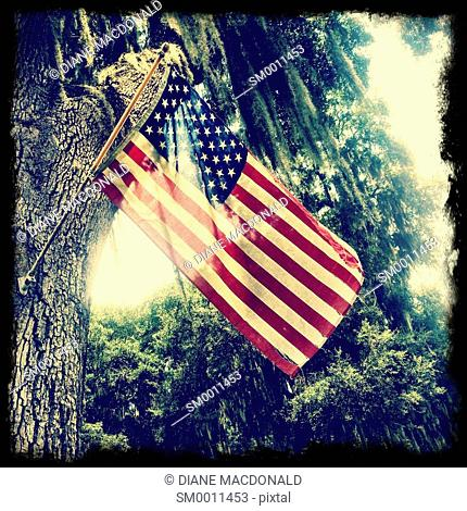 Tattered American flag hanging from a tree