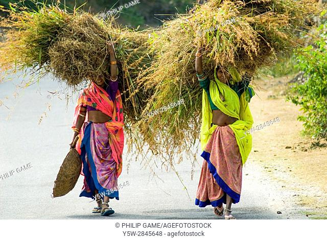 Two rural women share a load of fodder, Rajasthan, India