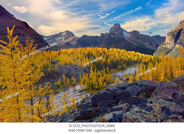 mountain landscape with larch trees in autumn in British Columbia