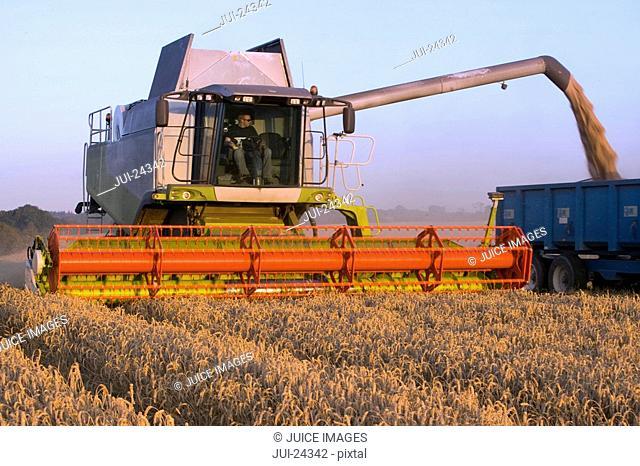 Harvester loading truck