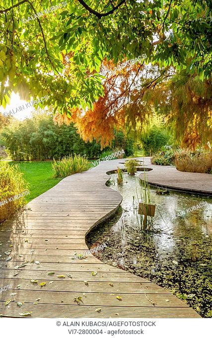 Bald-Cypress, Water Garden, Ecole du Breuil, Paris, France