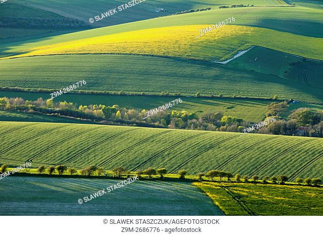 Spring evening in South Downs National Park near Brighton, East Sussex, England
